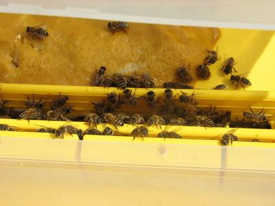 méhek etető