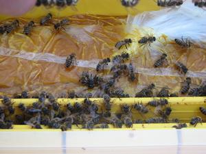 méhészet etetés